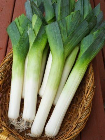 лук-порей: выращивание и уход