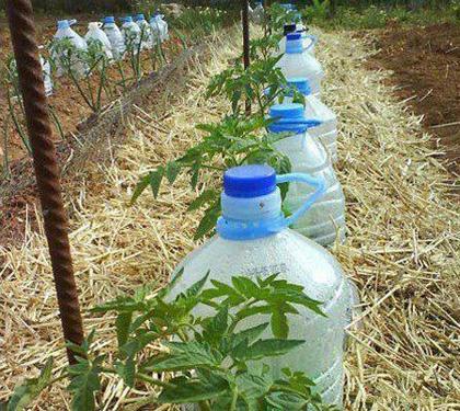 Фото капельного полива с помощью пластиковых бутылей